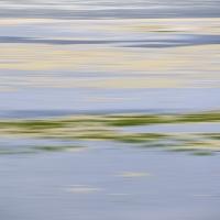 Saltmarsh1481_600
