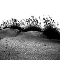 Shoreline40_600